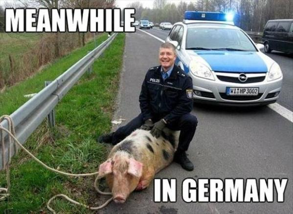 meanwhile-in-germany-cop-and-pig