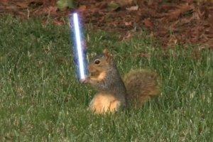 Jedi-Squirrel