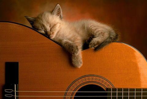 guitar kitty