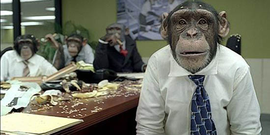 Monkey_Office_1A